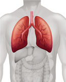 Lung cancer diagram in human Stock Images