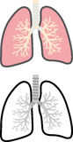 Lung cross-sectional view Stock Photo