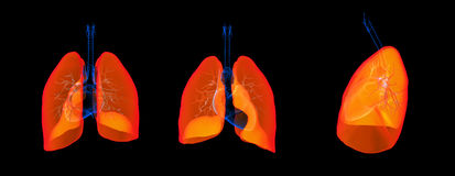 Lung Royalty Free Stock Photography