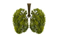 Lung green tree-shaped images, medical concepts, autopsy, 3D display and animals as an element royalty free illustration