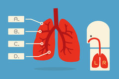 Lung infographic Stock Images