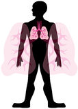 Lung Man. Isolated on a white background Stock Photo