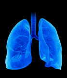 The lung Stock Image