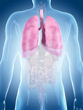 The lung Stock Images