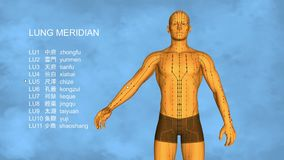 Lung Meridian stock illustrationer