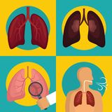 Lung organ human breathing icons set flat style. Lung organ human breathing icons set. Flat illustration of 4 lung organ human breathing vector icons for web vector illustration