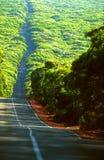 Lunga strada attraverso la foresta australiana Fotografia Stock