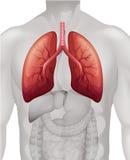 Lungcancerdiagram i människa stock illustrationer