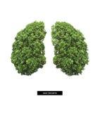 Lunge von Erde Stockfoto