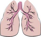 Lungenflügel Stockfotos
