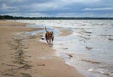 Lungo la costa Fotografie Stock