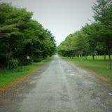 Lungo la strada, ci sono bei alberi nella campagna Immagini Stock