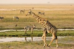 Lungofiume di Chobe Fotografia Stock