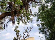 Lungomare con i bei alberi in cielo blu immagini stock