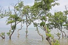 Lungomare degli alberi Immagine Stock