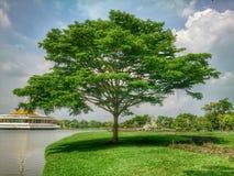 lungomare dell'albero Fotografie Stock Libere da Diritti