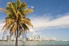 Lungomare di Miami e palma Fotografia Stock
