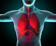 Lungor som ses på röntgenstrålar stock illustrationer