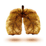 Lungs. Man's lungs made of soft yellow leafs Stock Photo