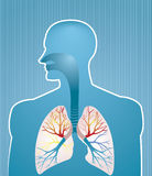 lungs Arkivfoto