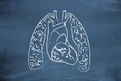 Lungs. Drawn on a blackboard Stock Photo