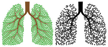 Lungs. Isolated illustration eps 10 Lungs in good condition and in a terrible state Royalty Free Stock Photos