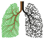 Lungs. Isolated illustration eps 10 Lungs one good other bad Royalty Free Stock Image