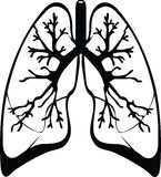 Lungs Stock Photography