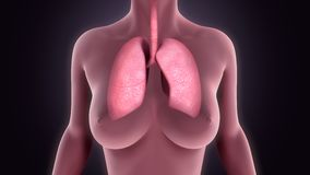 lungs Royaltyfri Fotografi
