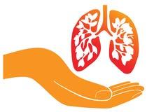 lungs Royaltyfri Bild