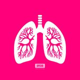 Lungs anatomy vector poster Stock Images