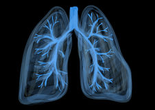 Lungs Royalty Free Stock Photography
