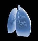 Lungs and bronchi. Medical illustration Royalty Free Stock Image