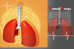 Lungs in coloured background Royalty Free Stock Image