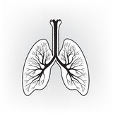 Lungs detailed sign. Human internal organ anatomy icon Stock Photography