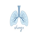 Lungs detailed sign. Human internal organ anatomy icon Royalty Free Stock Photos
