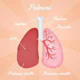 Lungs diagram Royalty Free Stock Photos