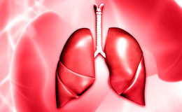 Lungs. Digital illustration of lungs in colour background stock images