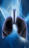 Lungs Royalty Free Stock Images
