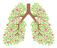 Lungs healthy Stock Photo