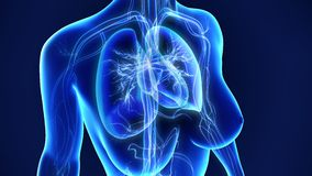 Lungs with Heart Royalty Free Stock Photos