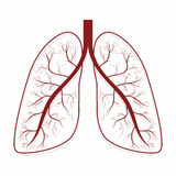 Lungs. Human lungs anatomy symbol. Vector illustration royalty free illustration