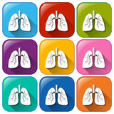 Lungs icons Royalty Free Stock Photos
