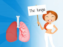 The lungs Stock Photo