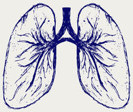 Lungs person Royalty Free Stock Photography