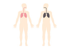 Lungs of a smoker vector Royalty Free Stock Image