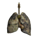 Lungs of Smokers Royalty Free Stock Photos