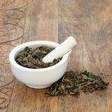 Lungwort Leaf Herb Stock Image