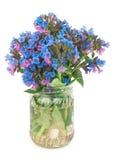 Lungwort medicinal (Pulmonaria officinalis) Royalty Free Stock Photography