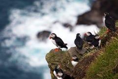 Lunnefåglar på en havsklippa Royaltyfria Foton